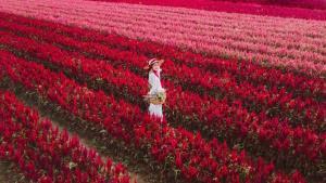 สวนดอกไม้ I love flower Farm (ภาพ: เพจ I love flower Farm โดย Ray Bhoonwatcharanon)