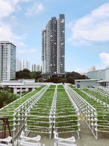 ไอเดียปลูกพืชผักบนดาดฟ้า ปท.สิงคโปร์ สร้างเสบียงอาหาร ต่อสู้โควิด-19
