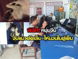 พิลึก! นักท่องเที่ยวจีนตระเวนจับแมวตัดเล็บ ให้นอนในตู้เย็น อ้างทำเพราะรักสัตว์ ไม่รู้กฎหมายไทย