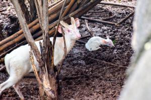 ภาพ: เพจสวนสัตว์นครราชสีมา KORAT ZOO
