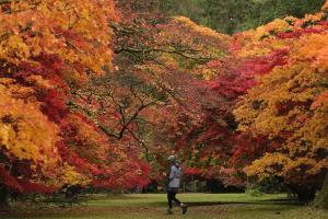 """งดงามชวนฝัน ใบไม้เปลี่ยนสีที่ """"สวนรุกขชาติฯ เวสตันเบิร์ต"""""""