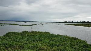 พื้นที่การเกษตรชัยนาทหลายพื้นที่ยังถูกน้ำท่วมขังหลายพันไร่ รอการระบาย