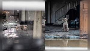 สะเทือนใจ! โซเชียลฯแห่แชร์ ภาพสุนัขยังรอเจ้าของในบ้านที่ถูกท่อส่งก๊าซระเบิด