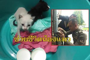 ตำรวจหนุ่มรักแมว...ช่วยชีวิต 2 ลูกแมวติดท่อระบายน้ำฝนอาคารตำรวจ จ.บุรีรัมย์ปลอดภัย