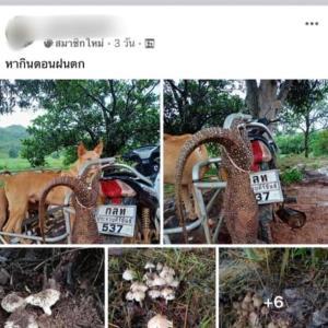 รวบตัวชายโพสต์ภาพตะกวดสัตว์ป่าคุ้มครอง มัดติดรถจักรยานยนต์ลงเฟซบุ๊ก