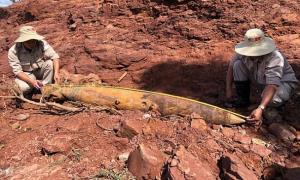 ผู้เชี่ยวชาญเข้าตรวจระเบิด MK82 ที่โผล่ขึ้นมาบนพื้นดินหลังน้ำท่วมใน จ.กว๋างจิ