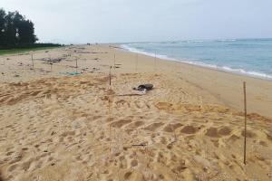 ฮือฮา! พบร่องรอยเต่าทะเลขึ้นวางไข่หาดบางขวัญ จ.พังงา
