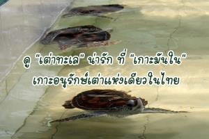"""ดู """"เต่าทะเล"""" น่ารัก ที่ """"เกาะมันใน"""" เกาะอนุรักษ์เต่าแห่งเดียวในไทย"""