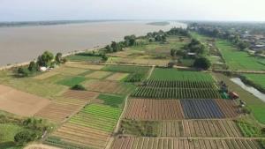 นครพนมเดินหน้าหนุนเกษตรแปลงใหญ่ ผุด 4 โครงการการันตีรายได้มั่นคง