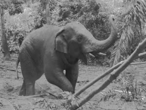 เจ้างาสั้นล้ม ผลชันสูตรกระสุนฝัง 15 นัด ย้ำพื้นที่คนกับช้างปัญหาที่แก้ไม่ตก!!