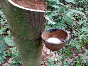 เกิดเหตุช้างป่าตกมันทำร้ายคนกรีดยางฯ ดับอนาถ เผยเป็นรายที่ 3 ในรอบ  20วัน