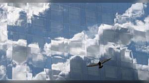 หมอนักอนุรักษ์วอนหยุดใช้กระจกฉาบปรอทติดรอบตึกสูงกรุงเทพฯ หลังพบนกอพยพหลายตัวชน ทั้งเจ็บหนักและตาย