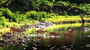 """สำรวจสุขภาพป่ามรดกโลกทุ่งใหญ่-ห้วยขาแข้ง  ผ่านดัชนีชี้วัด """"สัตว์ป่าในผืนป่าตะวันตก"""""""