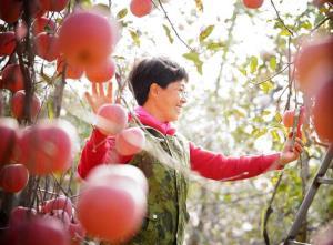 ชีวิตเปลี่ยน! 'สะใภ้ขี้เหร่' ไลฟ์ขายแอปเปิลจนโด่งดังสู่เน็ตไอดอล