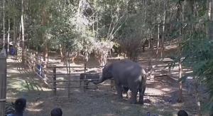 นาทีแตะงวง!! ช้างแม่รับ (แม่ทีน่า) กับลูกช้างทับเสลา ยอมรับเป็นแม่ลูกกันแล้ว (ชมคลิป)