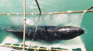 """อาการยังน่าห่วง! """"ดร.ธรณ์"""" ให้กำลังใจเจ้าหน้าที่ที่ดูแลวาฬเพชฌฆาตดำ หลังเกยตื้นเกาะเตียบ จ.ชุมพร"""