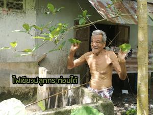 ชาวบ้านในเตาเฮ! รัฐไฟเขียวอนุญาตให้ปลูกพืชกระท่อมได้