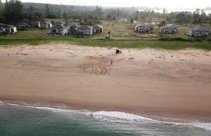 ภาพ - ร่องรอยการขึ้นวางไข่บนชายหาดของแม่เต่ามะเฟือง