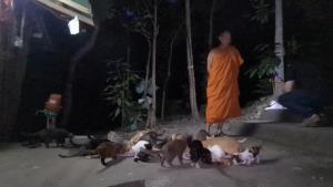 พระลำปางเดือดร้อนหนักรับภาระเลี้ยงแมวกว่า 400 ตัวถูกเอามาทิ้ง-วอนพวกรักสัตว์สร้างภาพหยุดพฤติกรรม