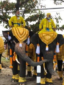 พสกนิกรทั่วสารทิศรอเฝ้าฯ รับเสด็จ ในหลวง-พระราชินี วังช้างอยุธยาแลแพนียดนำช้าง 10 เชือก ร่วมถวายพระพร