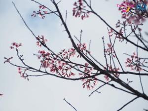 ภาพอัพเดท 22 พ.ย. 2563 จากเพจ TAT Loei Office