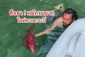 ฮือฮา! นักท่องเที่ยวพบหมึกยักษ์หายาก สีแดงทั้งตัวที่กระบี่