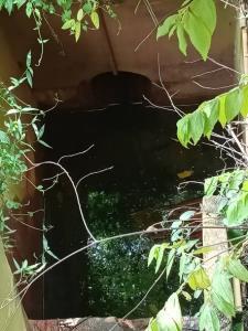 ฝนหนักเมืองระยองทำน้ำฝนปนสารเคมีไหลเข้าบ่อเลี้ยงกบชาวบ้านตายยกบ่อ