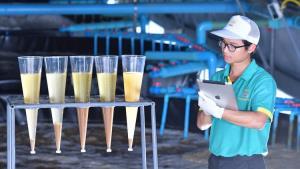 ซีพีเอฟชี้ห่วงโซ่การผลิตที่ยั่งยืน คือโอกาสของกุ้งไทยยุค New Normal