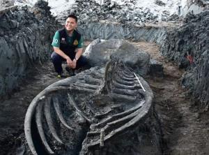 พบโครงกระดูกวาฬดึกดำบรรพ์ 2,000 – 6,000 ปี! ที่บ้านแพ้ว สะท้อนความหลากหลายทางชีวภาพท้องทะเลไทยในอดีตที่สมบูรณ์