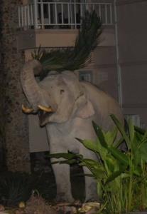 """ช้างหาทำ! ไม่ใช่ปูนปั้น แต่ตัวเป็นๆ """"พลายสาริกาช้างป่าสายอินดี้"""""""