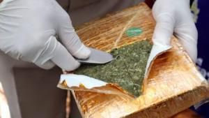 ยึดกัญชาเกรดพรีเมียมได้อีกครึ่งตัน ริมน้ำโขงนครพนม มูลค่ากว่า 10 ล้านบาท