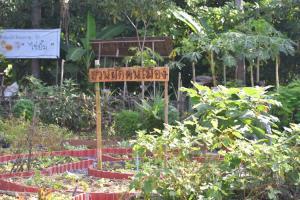 สสส.-เครือข่ายสวนผักคนเมือง หนุนการสร้างความมั่นคงทางอาหารในภาวะวิกฤตโควิด-19 ส่งเสริมให้คนไทยกินผักผลไม้ให้มาก เพื่อสุขภาวะที่ดี