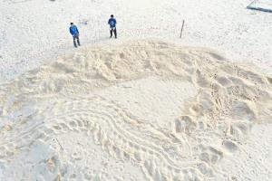 แม่เต่ามะเฟืองขึ้นวางไข่ที่ชายหาดในพังงาเป็นรังที่ 7 แล้ว มีไข่ดี 101 ฟอง