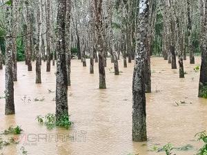 ปภ.ตรังเตือนประชาชนเฝ้าระวังน้ำท่วมรอบ 2 โดยเฉพาะพื้นที่ริมคลองนางน้อย