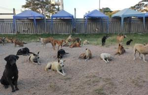 ทำดีต้องชม! นักศึกษา ม.บูรพา ปรับปรุงภูมิทัศน์ ทำความสะอาดศูนย์พักพิงสุนัขจรจัดชั่วคราว ม.บูรพา