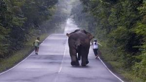 วิ่งเล่นหรือวิ่งไล่? ชาวเน็ตประทับใจ เผยภาพช้างป่าเขาใหญ่วิ่งกับนักท่องเที่ยว