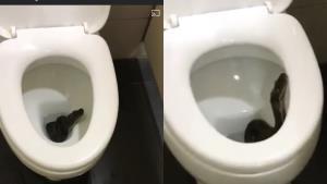 หนุ่มเตือน! หากต้องแวะเข้าห้องน้ำปั๊มต้องระวัง หลังพบงูสีดำเลื้อยอยู่ในโถส้วม (ชมคลิป)