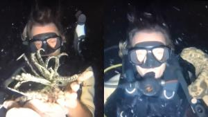 ทช.เผยคดี 2 ต่างชาติจับสัตว์ทะเลเซลฟีพะงัน ส่งกลับประเทศแล้ว 1 อีกรายขอยื่นอุทธรณ์