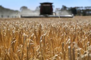 ออสเตรเลียจ่อฟ้อง WTO กรณีถูก 'จีน' รีดภาษีข้าวบาร์เลย์