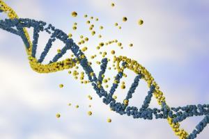 ชะลอวัย ยืดอายุเซลล์ด้วย Telomerase