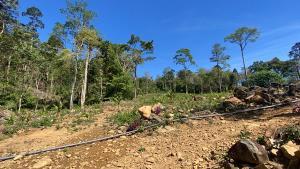 ป.ป.ช.จันทบุรีนำหน่วยงานที่เกี่ยวข้องติดตามการเอาผิดนายทุนรุกที่ป่าสงวนทำสวนผลไม้
