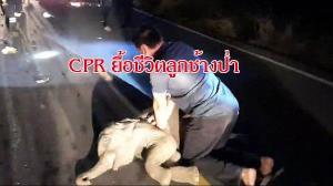 วินาทีชีวิต! อาสากู้ภัยจันทบุรีเร่งทำ CPR ยื้อชีวิตลูกช้างป่าหลังถูก จยย.พุ่งชนจนสลบคาถนนทั้งคนทั้งช้าง