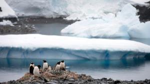 ไม่รอดสักแห่ง! โควิด-19 ระบาดครบทุกทวีปทั่วโลก หลังแอนตาร์กติกาพบผู้ติดเชื้อกลุ่มแรก