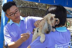 มช.ผุดโครงการ (ห)มา ซีเอ็มยู เปลี่ยนสุนัขจรเป็นสุนัขชุมชน
