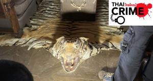 ป่าไม้บุกยึดซากเสือดำ-เสือโคร่ง โชว์หราในโรงแรมหรูกลางกรุง!