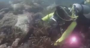 อุทยานฯ รวบนักดำน้ำงัดประการังถ่ายคลิปโชว์ ชี้มีความผิดฐานทำลายทรัพยากรฯ (ชมคลิป)