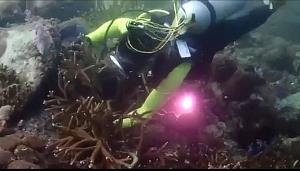 """อย่าหาทำ!! """"หักปะการัง โชว์สัตว์"""" ไม่รอดแน่ โทษหนักปรับถึงล้าน ติดคุกถึง 10 ปี"""