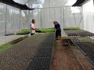 แม็คโคร ส่งเสริมวิสาหกิจชุมชนแปลงใหญ่ผักท่ากระดาน ฉะเชิงเทรา ปรุงดิน บำรุงผักปลอดภัย ใต้รอยยิ้มจากรายได้มั่นคง