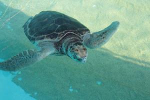ข่าวร้ายปลายปี!! พบสารเคมี 4,000 ชนิด ในแนวปะการังใหญ่สุดในโลก เหตุเต่าทะเลผิดปกติ!