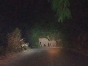 อุทยานฯ ทองผาภูมิเตือนนักท่องเที่ยว-ประชาชนขับรถยามค่ำคืนต้องระวังช้างป่าข้ามถนนสาย 323
